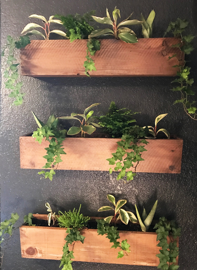 Diy Living Plant Wall Urban Cottage Living